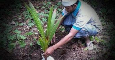 images 2021 04 03T084819.821 1 390x205 - Paribasa Banua Banjar: Kada Batanam Nyiur