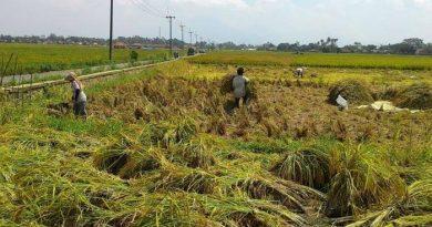 images 2021 04 15T112431.353 390x205 - Paribasa Banua Banjar: Tasanda Pahumaan