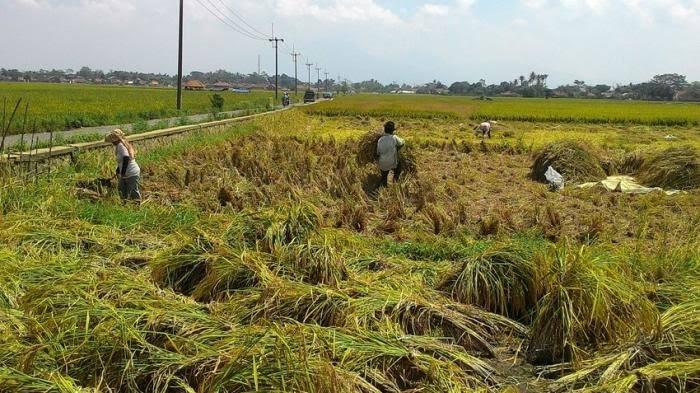 images 2021 04 15T112431.353 - Paribasa Banua Banjar: Tasanda Pahumaan